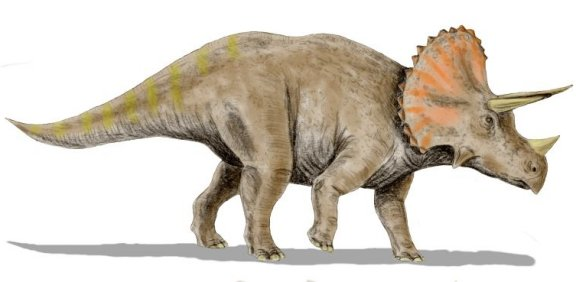 Triceratops horridus, a ceratopsian from the Late Cretaceous of North ...